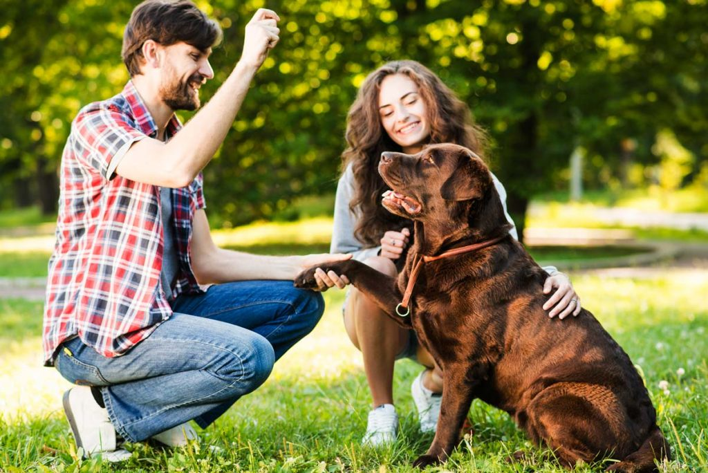 A family of a husband and wife playing in the park with their chocolate lab
